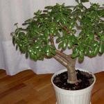 Рекомендуемые растения для возрастных групп детского сада