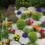 Многолетние дачные цветы для сада и огорода