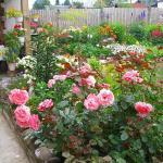 О мире растений и загородной жизни